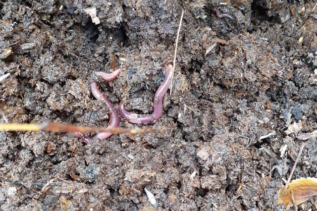 Organic Compost Apni jaivik kheti An Organic farm
